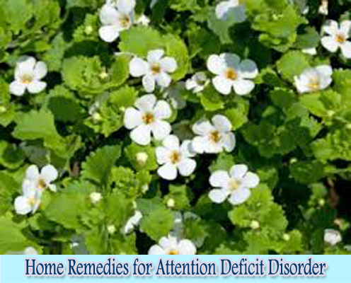 Bacopa : Home Remedies for Attention Deficit Disorder