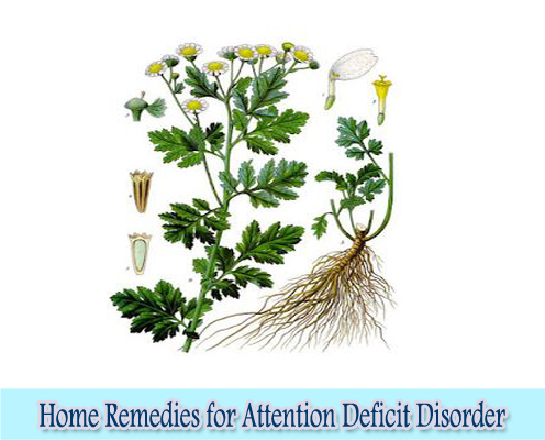 Catnip : Home Remedies for Attention Deficit Disorder