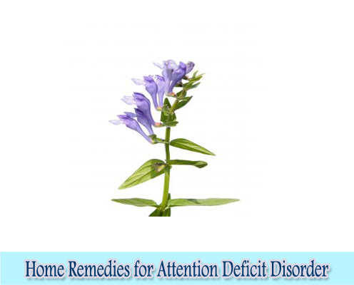 Skullcap : Home Remedies for Attention Deficit Disorder