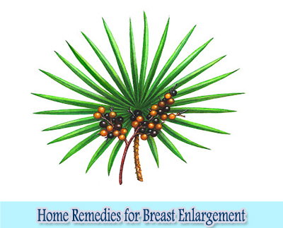 Saw Palmetto : Home Remedies for Breast Enlargement