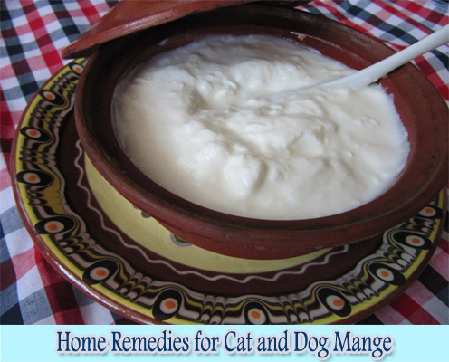 Best Home Remedy For Cat Mange