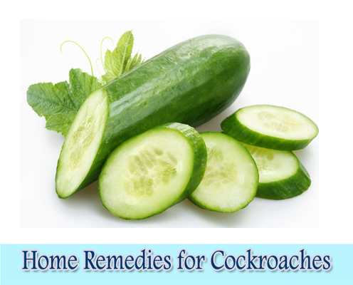Cucumber Slices : Home Remedies for Cockroaches