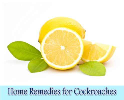 Lemons : Home Remedies for Cockroaches