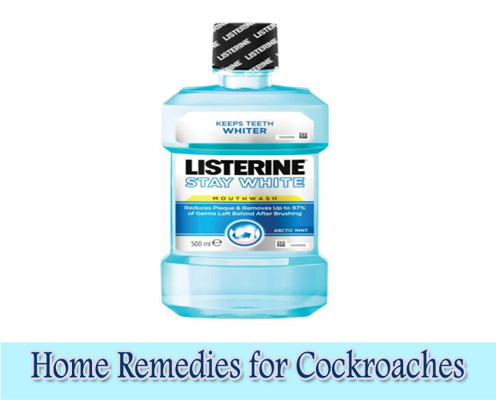 Listerine : Home Remedies for Cockroaches