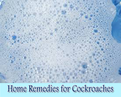 Soapy Water : Home Remedies for Cockroaches