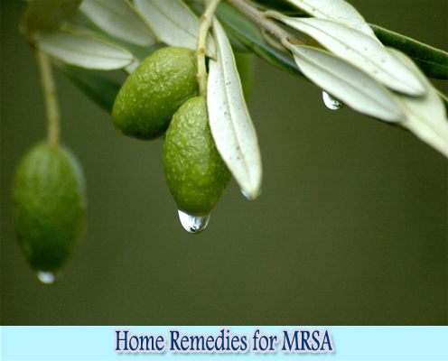 Olive Leaf Extract : Home Remedies for MRSA