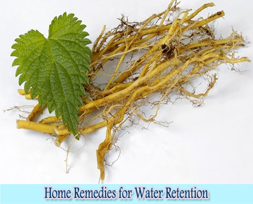 Nettle : Home Remedies for Water Retention