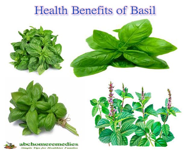 Top 10 Health Benefits of Basil